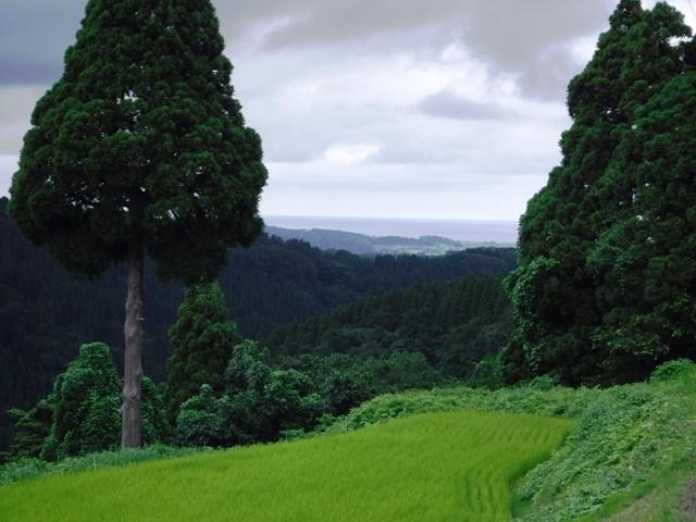 160718_仏生寺ウォーク(148)