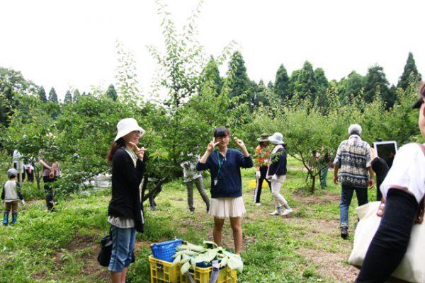 160619_稲積梅 収穫体験(132)圧縮