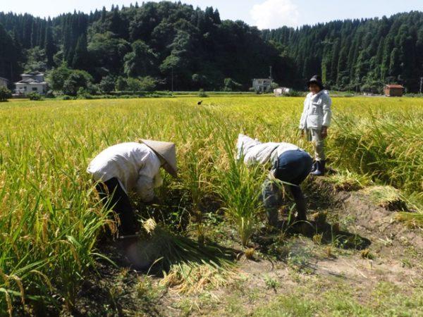 170902_営農脇_稲刈り (115)圧縮