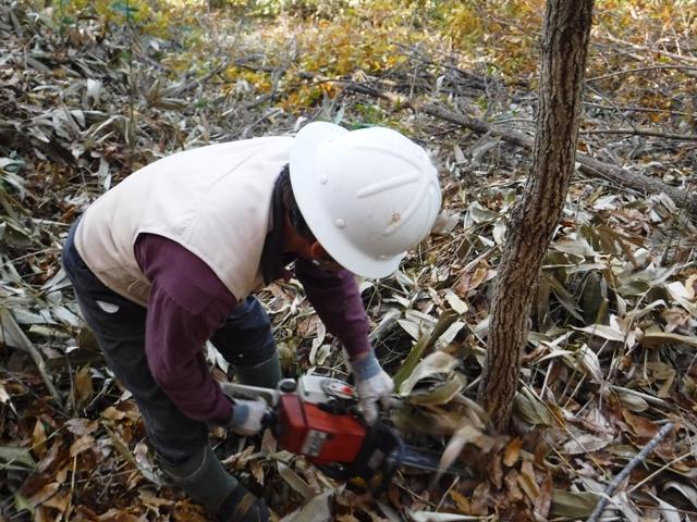 171107_ほだ木伐採(104)