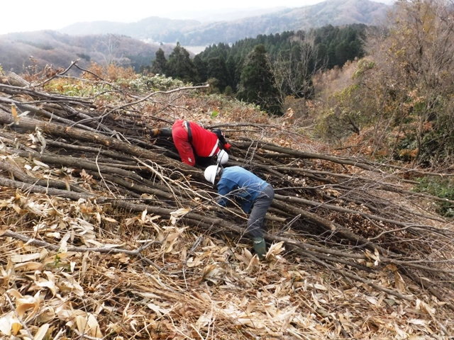 171204_ほだ木伐採(116)圧縮