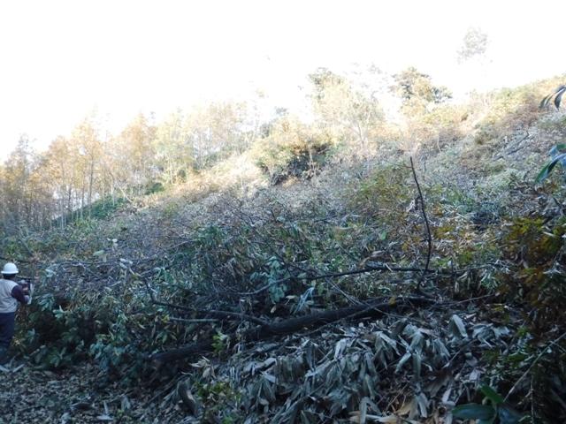 171107_ほだ木伐採(119)